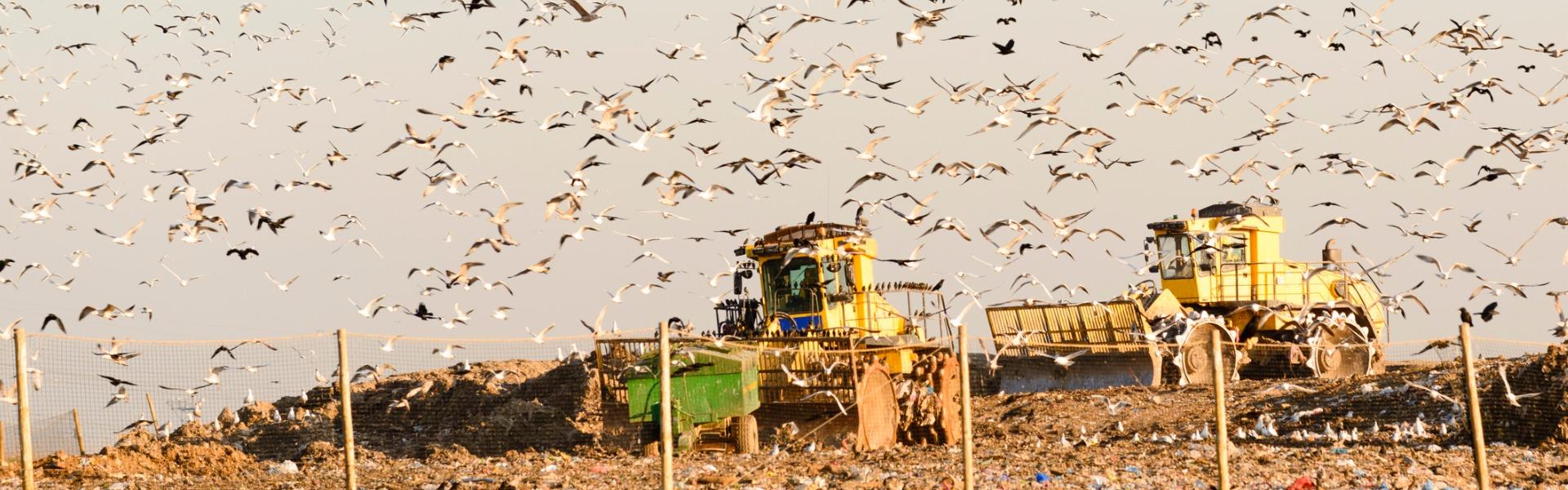 Prevent Landfill